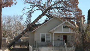 Columbia Emergency Tree Removal