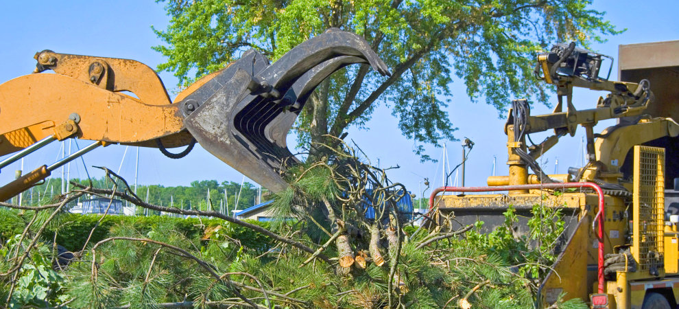 Hallsville Tree Trimming & Removal